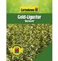 GARTENKRONE Gold-Liguster, Ligustrum ovalifolium »Aureum«, winterhart-Thumbnail