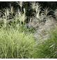 Gräser, grün-Thumbnail