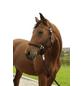 Covalliero Halfter »Hippo«, passend für Pony, Gr. 1, schwarz-Thumbnail
