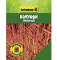 GARTENKRONE Hartriegel, Cornus sanguinea »Wintersun«, weiß, winterhart-Thumbnail