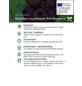 Heidelbeere Vaccinium corymbosum »Pink Lemonade«-Thumbnail