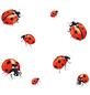 WENKO Herdabdeckplatte »Ladybird«, BxHxL: 3 x 5,5 x 52 cm, gehärtetes Glas, mehrfarbig-Thumbnail