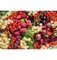 GARTENKRONE Himbeere, Rubus idaeus »Golden Queen«, Früchte: gelb, essbar-Thumbnail