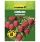 GARTENKRONE Himbeere Rubus idaeus »Schoenemann«-Thumbnail