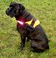 Hunde-Geschirr, Größe: m, neonorange-Thumbnail