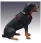 Hunde-Geschirr »Modern Art«, Größe: 65-75  cm, Rindsleder, schwarz-Thumbnail
