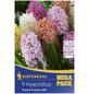 KIEPENKERL Hyazinthe Hyacinthus Hyacinthus orientalis »Hyacinthus orientalis«-Thumbnail