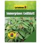 GARTENKRONE Immergrünes Geißblatt, Lonicera henryi, orange, winterhart-Thumbnail