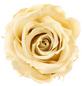 »Infinity-Bloom«, 12er-Pack konservierte Rosenköpfe, beige-Thumbnail