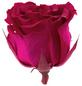 »Infinity-Bloom«, 12er-Pack konservierte Rosenköpfe, rosa-Thumbnail