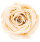 »Infinity-Bloom«, 6er-Pack konservierte Rosenköpfe , beige-Thumbnail