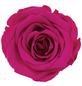 »Infinity-Bloom«, 6er-Pack konservierte Rosenköpfe, rosa-Thumbnail