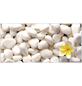 EL FUEGO Infrarotheizung »AY6922 - Steine | Blütenblätter«-Thumbnail