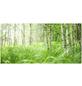 Papermoon Infrarotheizung »EcoHeat - Wald«, Glänzend-Thumbnail