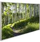 Papermoon Infrarotheizung »EcoHeat - Wald«, Matt-Thumbnail