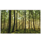 Papermoon Infrarotheizung »EcoHeat - Wald | Morgensonne«, Matt-Thumbnail