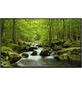 Papermoon Infrarotheizung »EcoHeat - Wasser | Wald«, Matt-Thumbnail