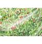 WINDHAGER Insektennetz, BxL: 400 x , Kunststoff-Thumbnail