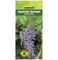GARTENKRONE Japanischer Blauregen, Wisteria floribunda »Viola Plena«, Blüten: violett-Thumbnail