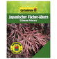 GARTENKRONE Japanischer Fächerahorn, Acer palmatum »Crimson Princess«, Blattfarbe rot-Thumbnail