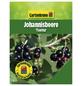 GARTENKRONE Johannisbeere, Ribes rubrum »Tsema« Blüten: weiß, Früchte: rot, essbar-Thumbnail