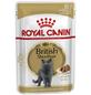ROYAL CANIN Katzen-Nassfutter, 1 x FBN British Shorthair-Thumbnail