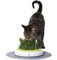 CATIT Katzengras »Catit Design Senses«, 70 g-Thumbnail