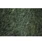 GARTENKRONE Kegelzypresse, Chamaecyparis lawsoniana »Elwoodii«, winterhart-Thumbnail