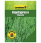 GARTENKRONE Kegelzypresse lawsoniana Chamaecyparis »Ellwoodii«-Thumbnail