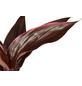 GARTENKRONE Keulenlilie Cordyline hybrid-Thumbnail