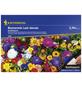 KIEPENKERL Kiepenkerl Antirrhinum Columbia Mix-Thumbnail