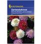 KIEPENKERL Kiepenkerl Blumenmischung Last Minute-Thumbnail