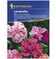 KIEPENKERL Kiepenkerl Saatgut, Landnelke, Dianthus caryophyllus Ikat, Mehrjährig-Thumbnail