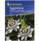 KIEPENKERL Kiepenkerl Saatgut, Passionsblume, Passiflora caerulea Passionsblume, Mehrjährig-Thumbnail