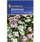KIEPENKERL Kiepenkerl Saatgut, Schleierkraut, Gypsophila Schleierkraut, Einjährig-Thumbnail