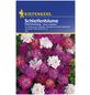 KIEPENKERL Kiepenkerl Saatgut, Schleifenblume, Iberis Schleifenblume, Mehrjährig-Thumbnail
