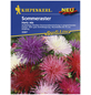 KIEPENKERL Kiepenkerl Saatgut, Sommeraster, Callistephus Hartz Mix, Einjährig-Thumbnail