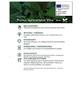 Kirschlorbeer, Prunus laurocerasus »Etna«, Blütenfarbe cremeweiß-Thumbnail
