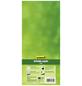 GARTENKRONE Kiwi, Actinidia arguta »Issai« Blüten: weiß, Früchte: grün, essbar-Thumbnail