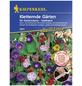 KIEPENKERL Kletternde Gärten Mix Saatb., Samen, Blüte: mehrfarbig-Thumbnail