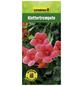 GARTENKRONE Klettertrompete, Campsis radicans, Blüten: orange-Thumbnail