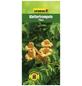 GARTENKRONE Klettertrompete, Campsis radicans »Flava«, Blüten: gelb-Thumbnail