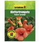 GARTENKRONE Klettertrompete, Campsis tagliabuana »Indian Summer«, Blüten: orange-Thumbnail