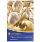 KIEPENKERL Knoblauch sativum Allium-Thumbnail