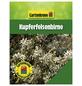 Kupferfelsenbirne, Amelanchier Lamarckii Blüten: weiß, Früchte: schwarz, Frosthart-Thumbnail