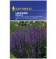 KIEPENKERL Lavendel angustifolia Lavandula-Thumbnail