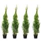 Lebensbaum 4 Stück, Thuja occidentalis »Smaragd«, Lieferhöhe: 100 - 120 cm-Thumbnail