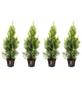 Lebensbaum 4 Stück, Thuja occidentalis »Smaragd«, Lieferhöhe: 60 - 80 cm-Thumbnail