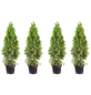 Lebensbaum 4 Stück, Thuja occidentalis »Smaragd«, Lieferhöhe: 80 - 100 cm-Thumbnail