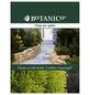 BOTANICO Lebensbaum occidentalis Thuja »Golden Smaragd«-Thumbnail